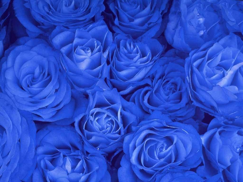 фото голубых цветов