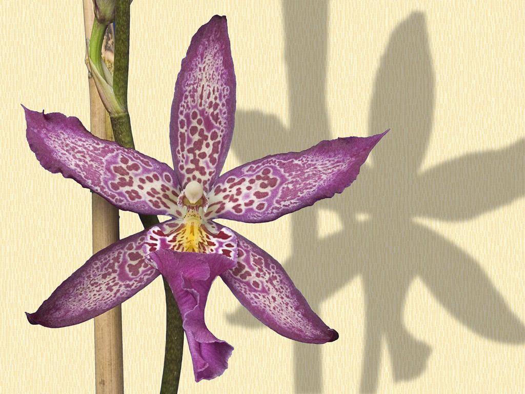 Определитель растений online  Плантариум