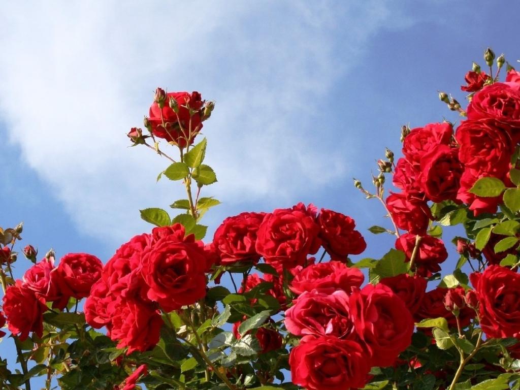 скачать картинки цветов бесплатно в хорошем качестве